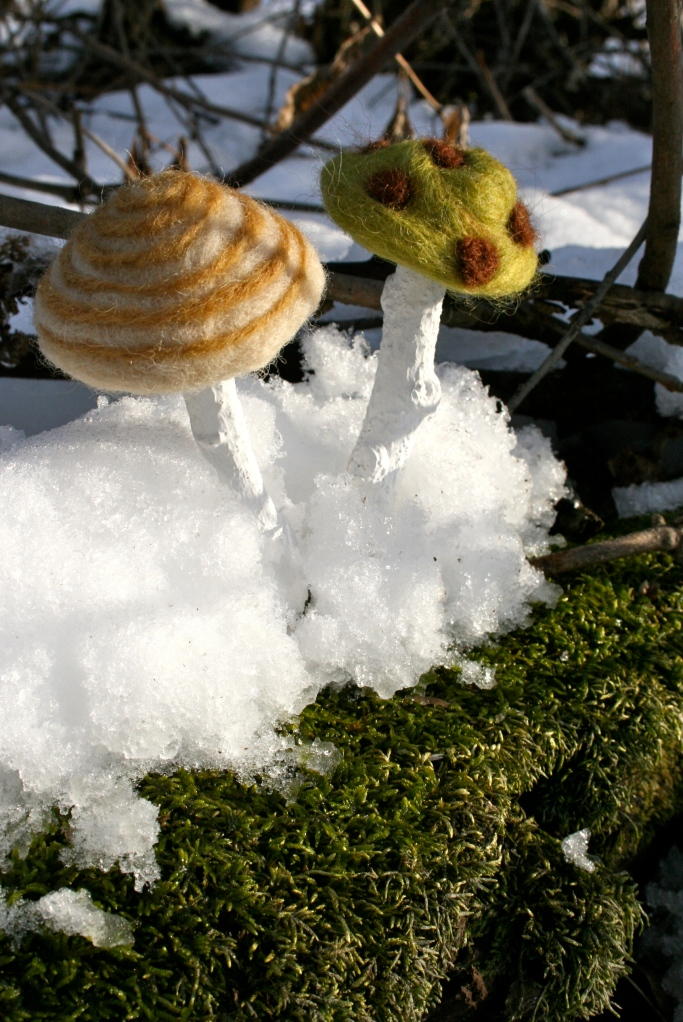 Wooly Winter mushrooms!