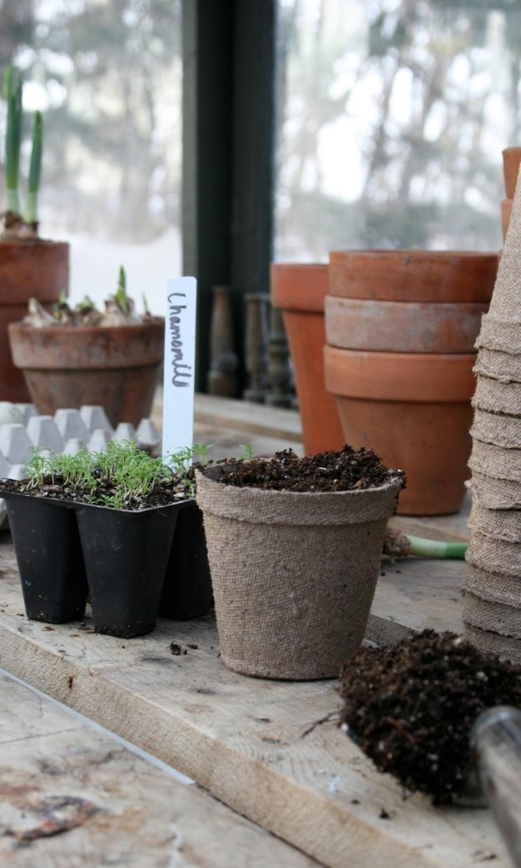 Greenhouse Scenes