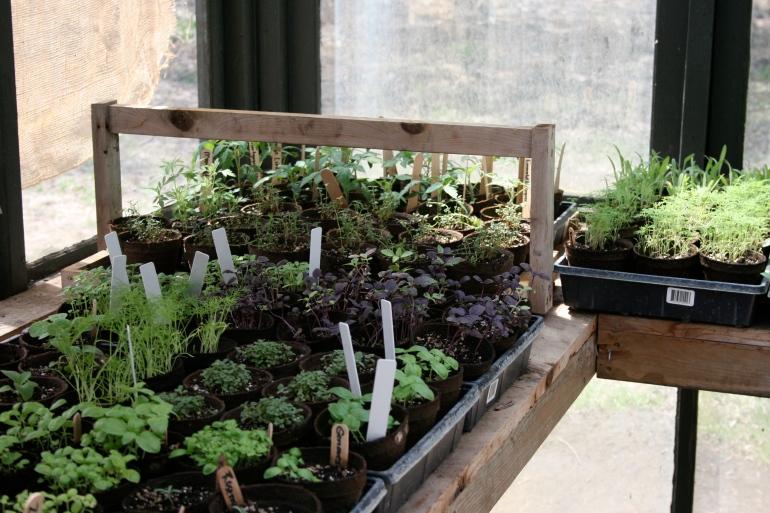 Herbs for the kitchen garden