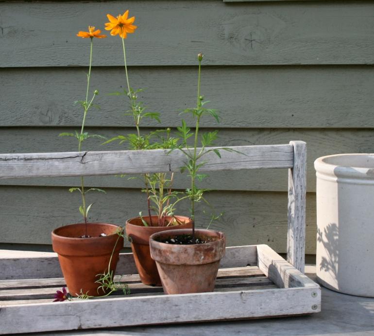 The Garden Trug