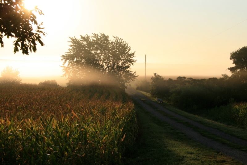 Early Autumn mornings