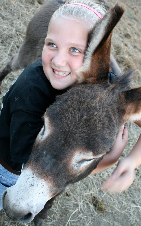 Hug a mini donkey!