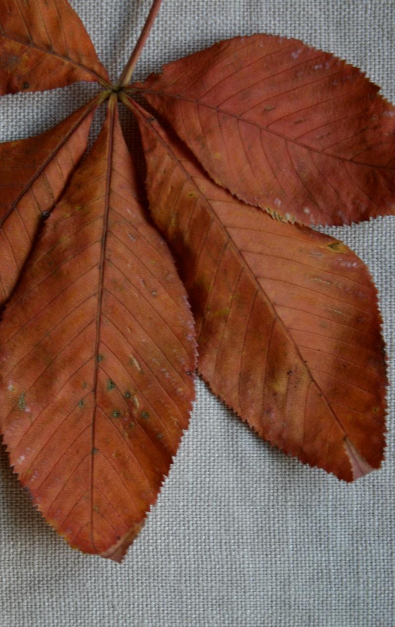 Autumn in darker shades