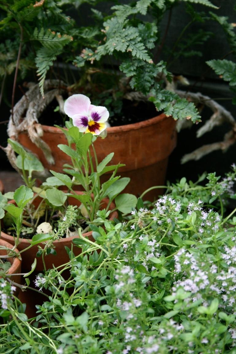 A garden speaks