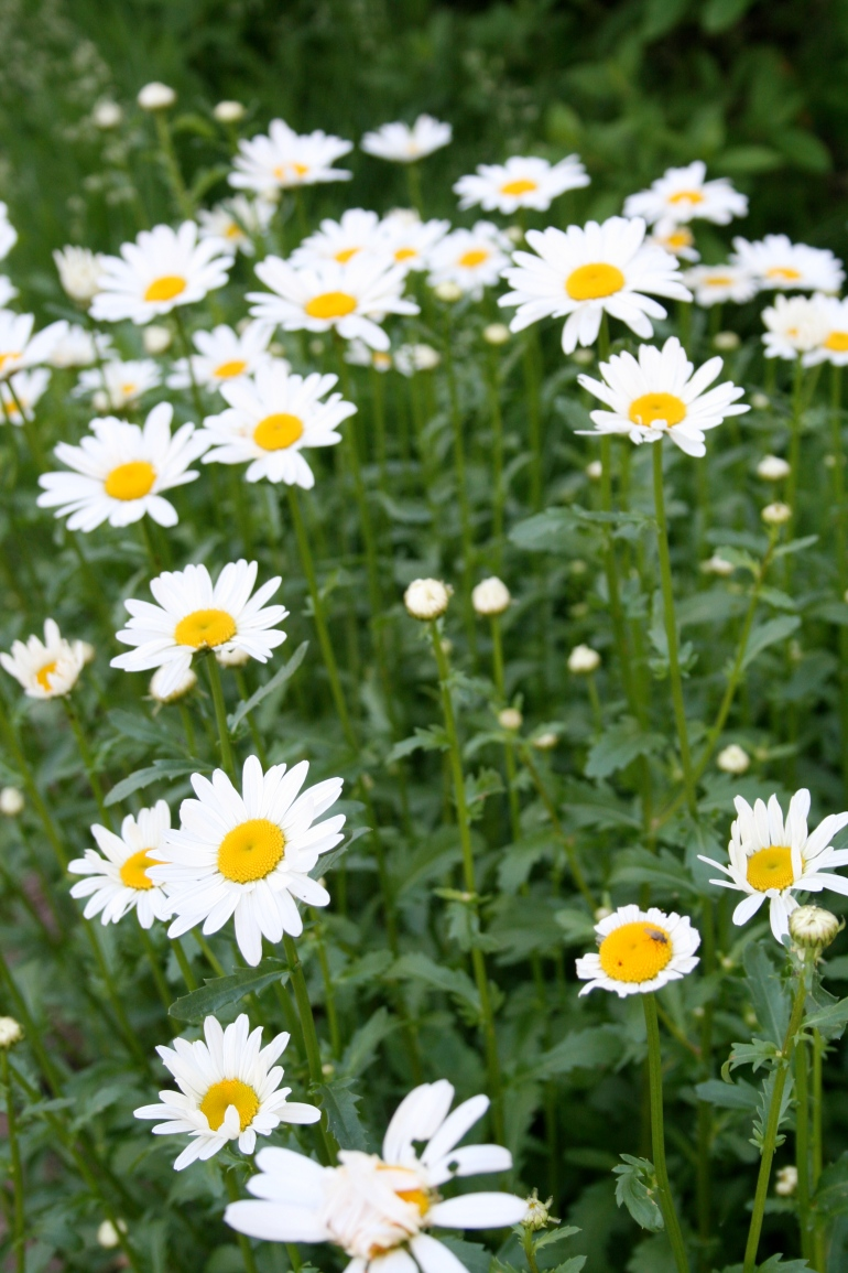 Heavy On The Daisies, Please!