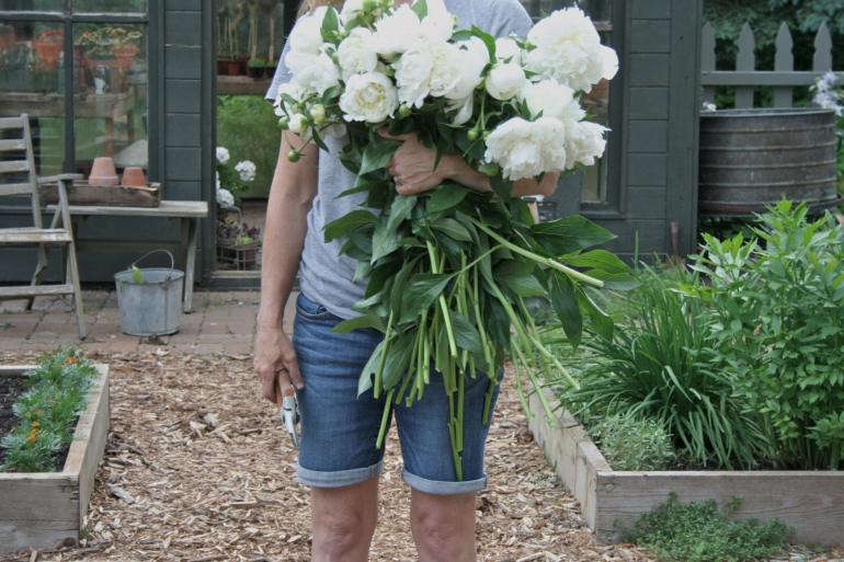 Saving The Peonies