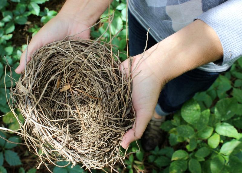 A found bird's nest.