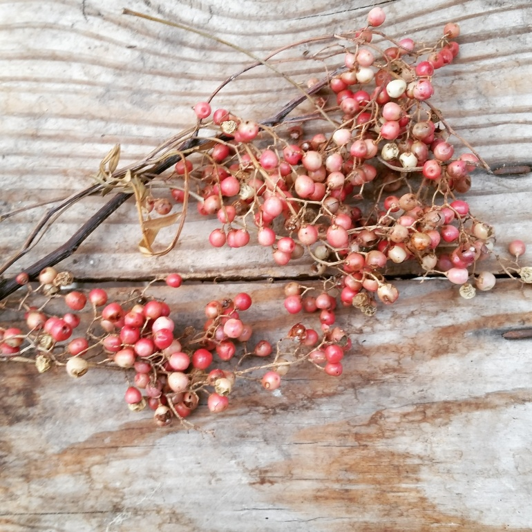 Some little pepperberries I found in the greenhouse today.