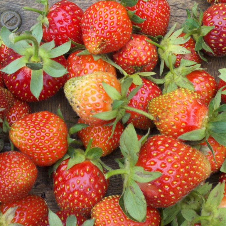 Garden Cravings